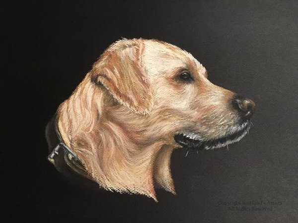 Golden Retriever - Pastel - A3 - 2018